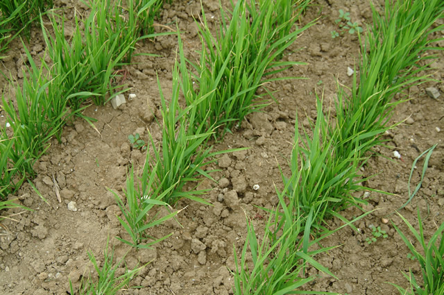 Perspectives on Dry Land Agriculture