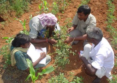 Promoting Livelihood Improvements in Dryland Farming on the Deccan Plateau