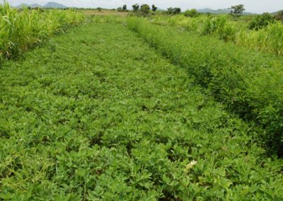 S &T based sustainable dry farming approaches