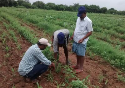 Dry land agriculture programme in Telangana