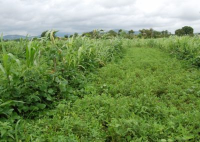 Improving dry farming through ecological agriculture