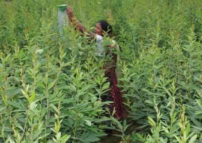 Poverty Alleviation through promotion of Sustainable Agricultural Practices