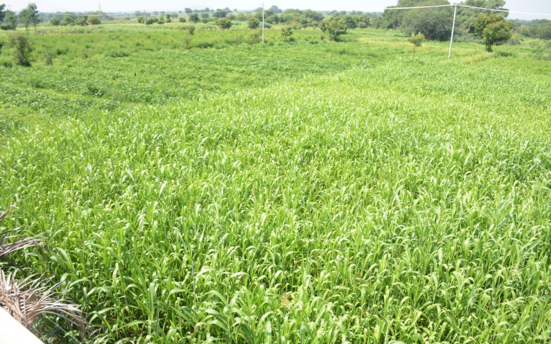 NABARD project in Bangarpet – Augmenting productivity of lead crops