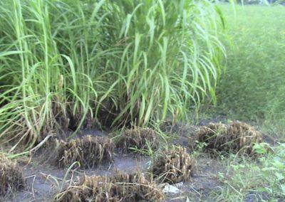 Bio-Farms for livelihood development of resource poor farmers